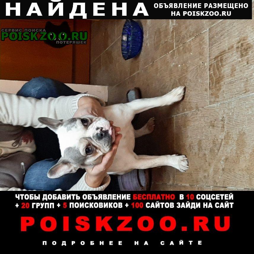 Найдена собака Симферополь