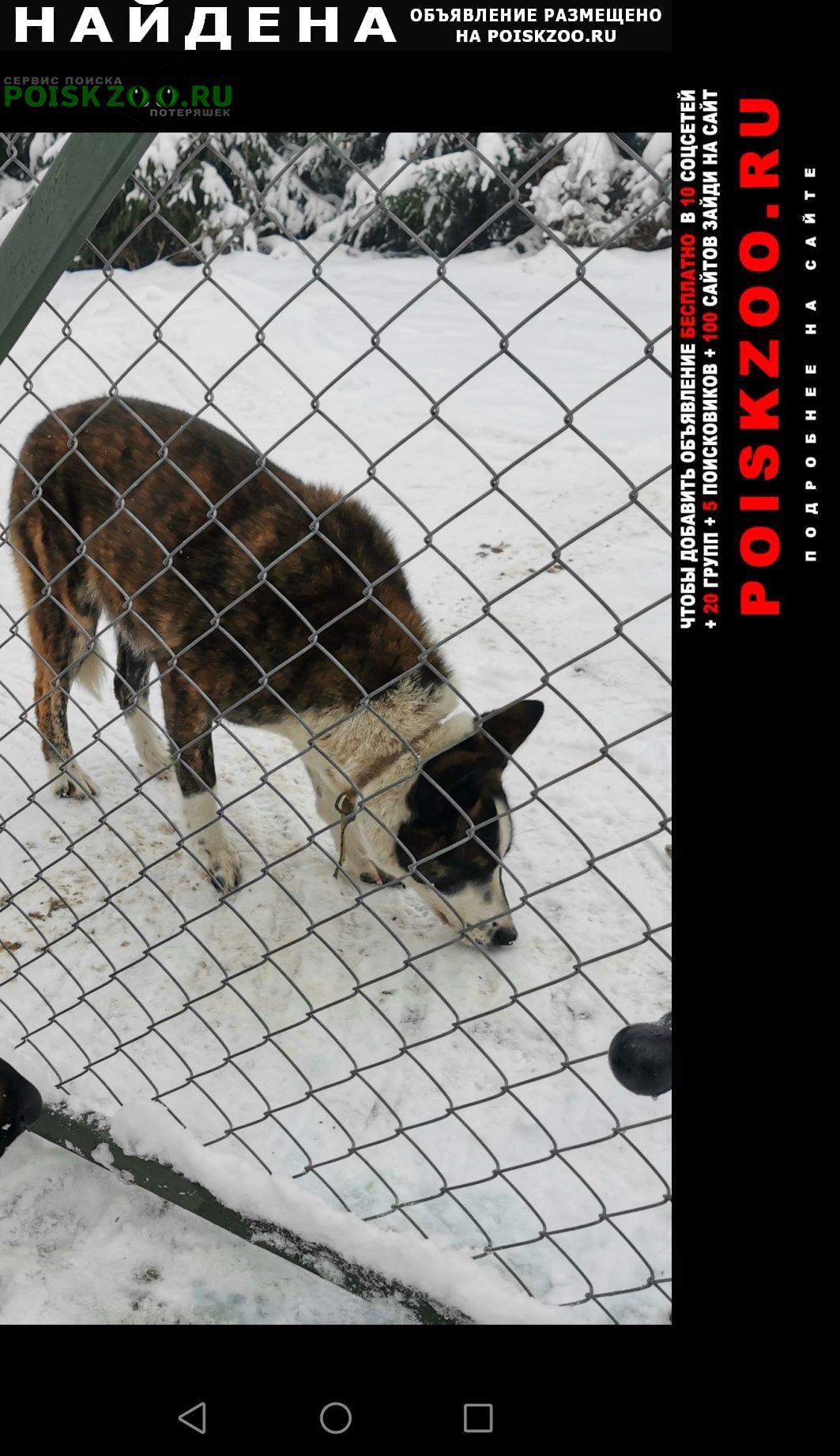 Найдена собака дер. ротково гатчинский район. Гатчина