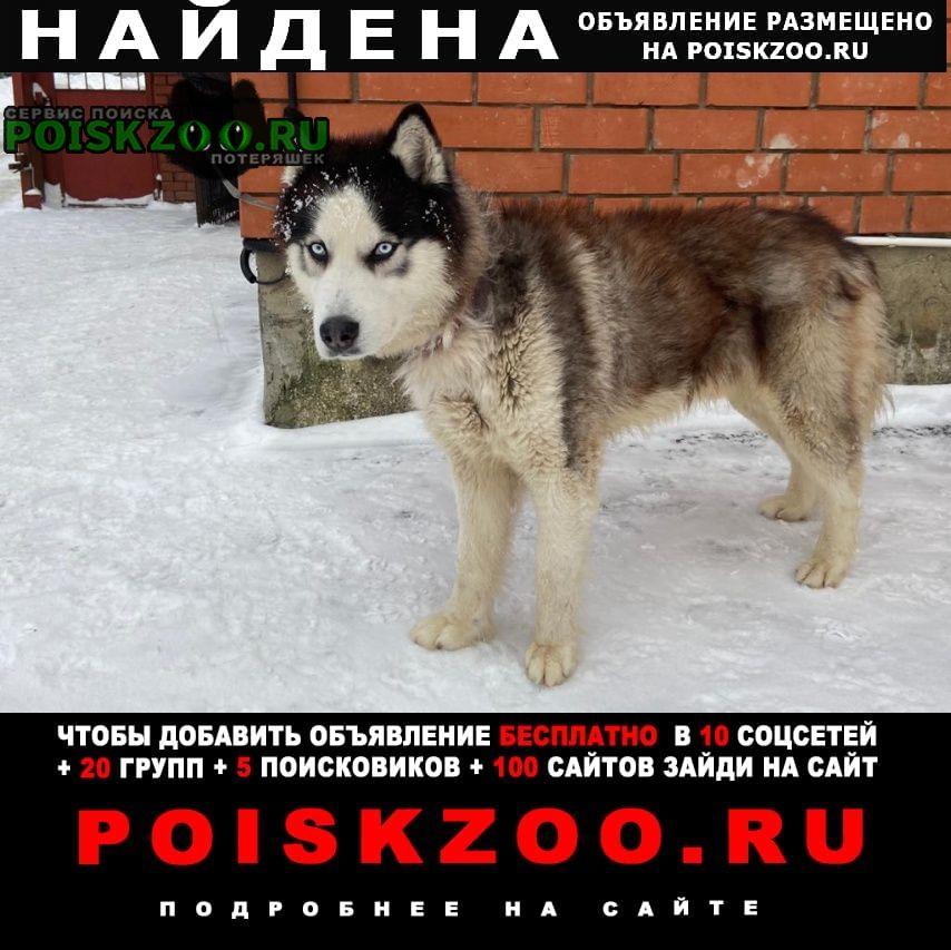 Найдена собака кобель хаски 4.5 года ищем хозяев Москва