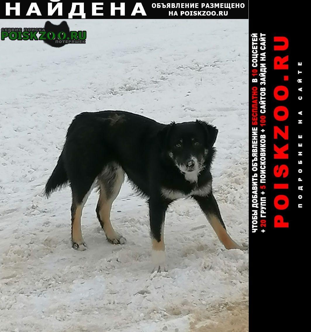 Найдена собака Ступино