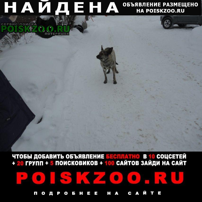 Найдена собака упитанный ушастик Нижний Новгород