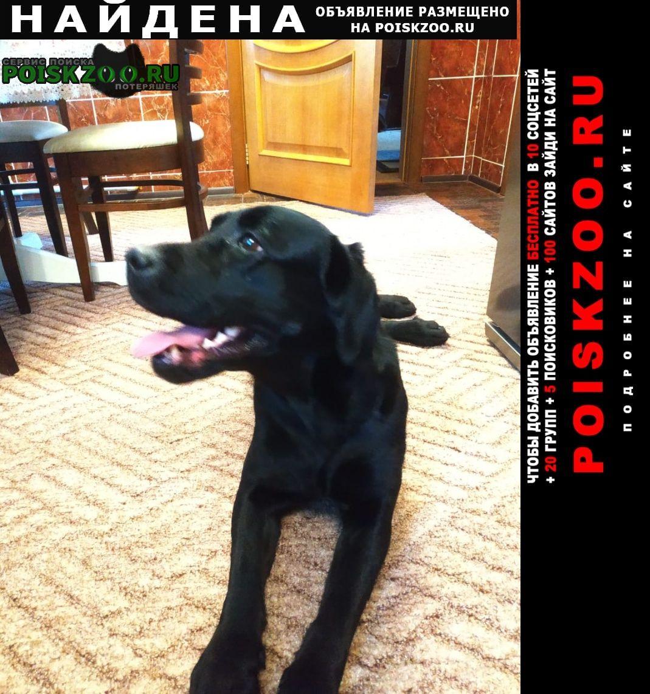 Найдена собака в верхнеуслонском районе Казань