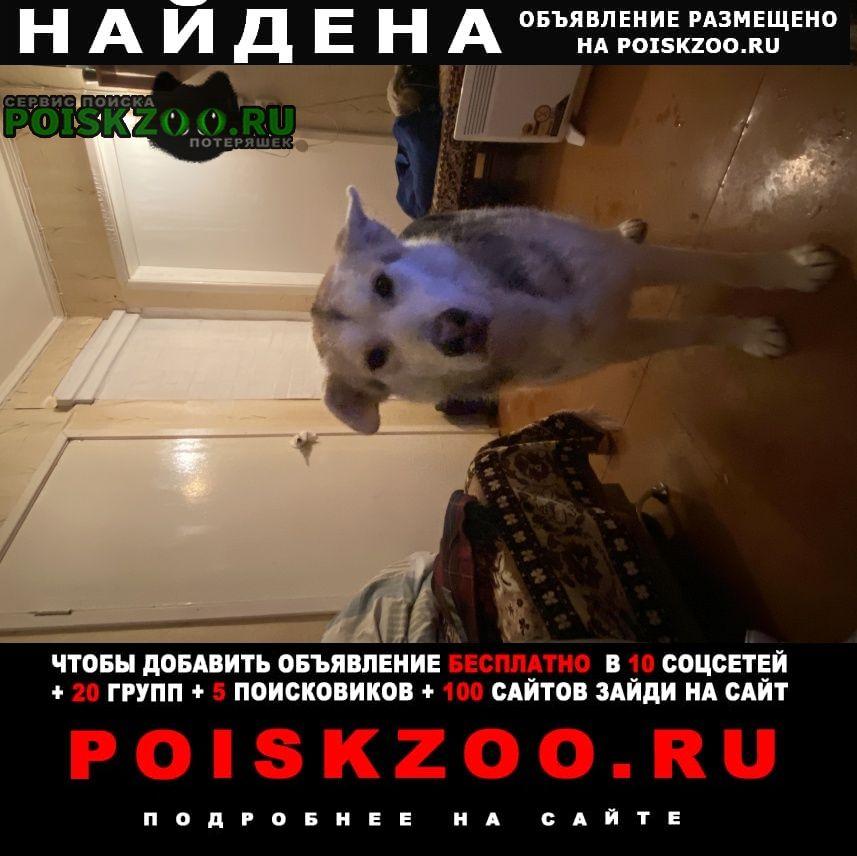 Найдена собака Бор