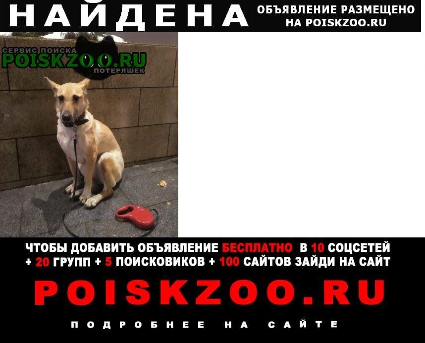 Найдена собака около каширской плазы Москва