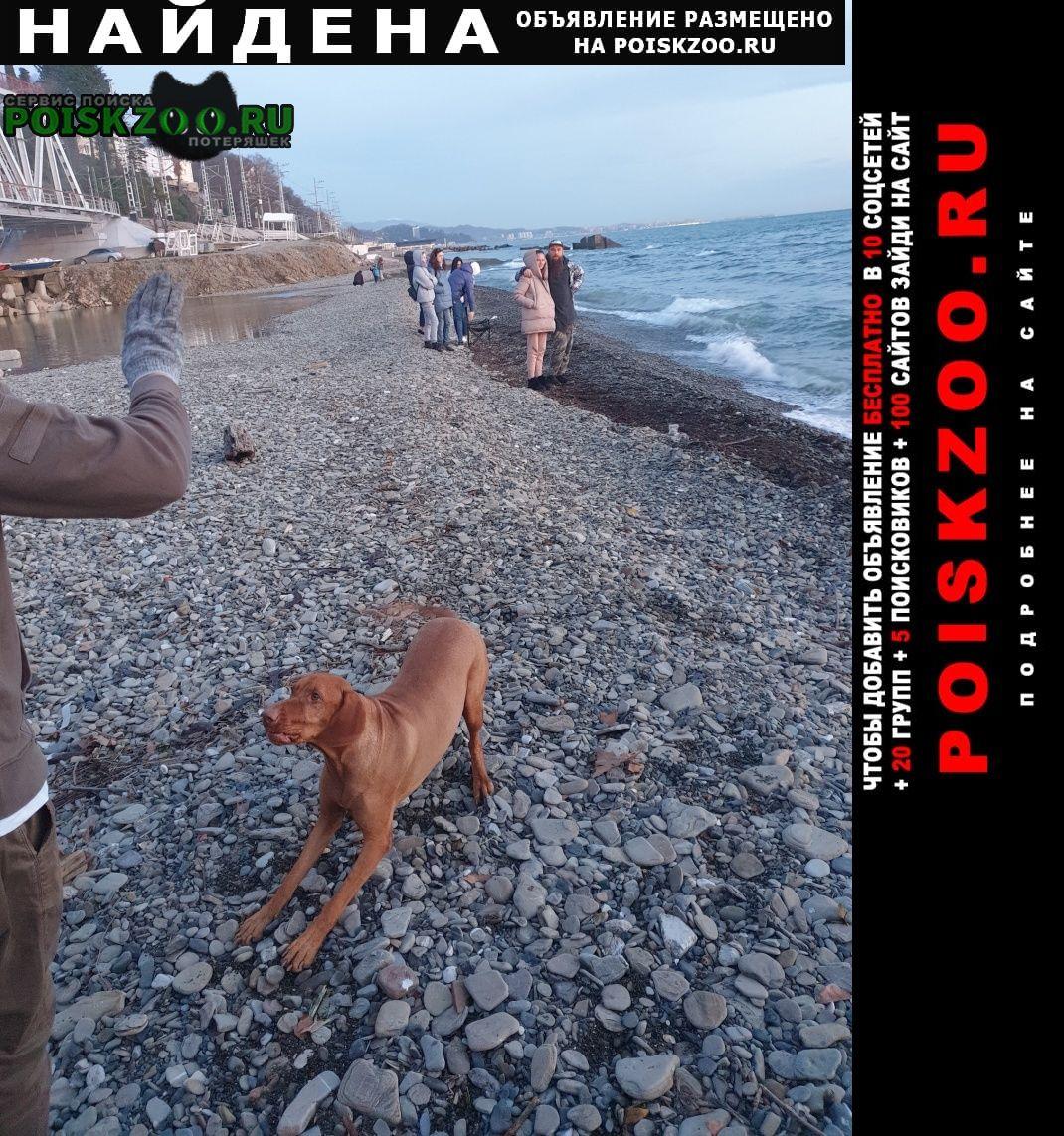 Найдена собака кобель Сочи