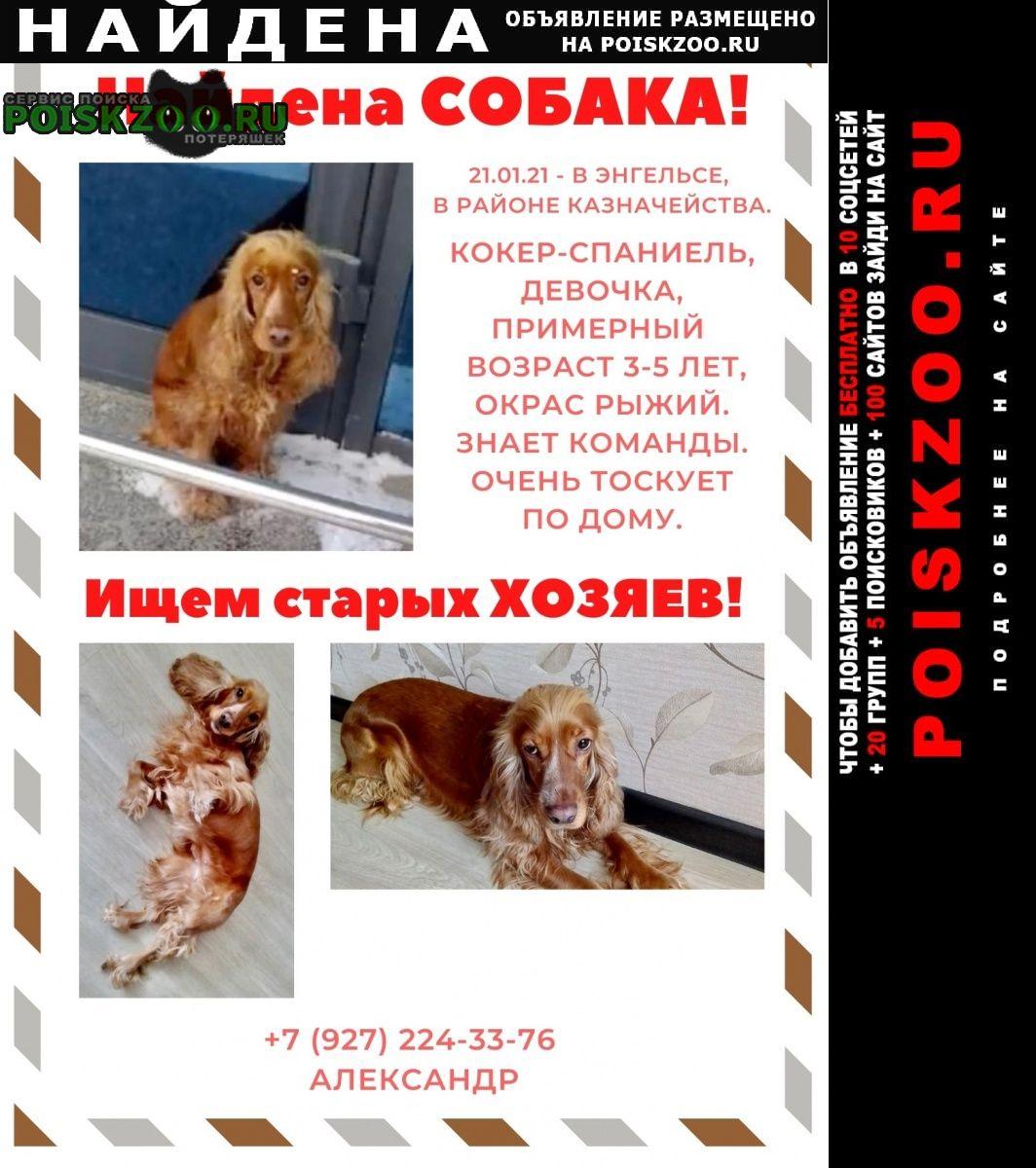 Найдена собака кокер спаниель Энгельс
