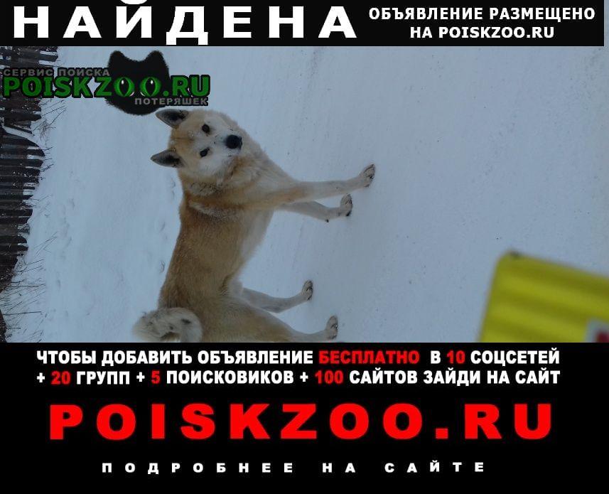 Найдена собака Ревда (Свердловская обл.)