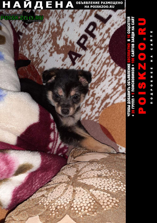 Найдена собака помогите наите дом малышке. Омск