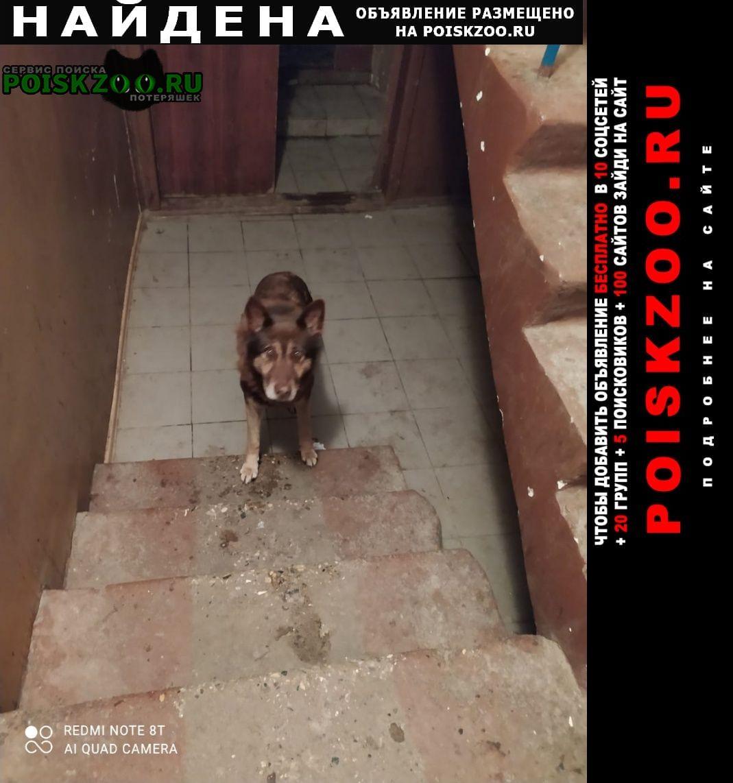 Найдена собака красивый пес в подъезде. Москва