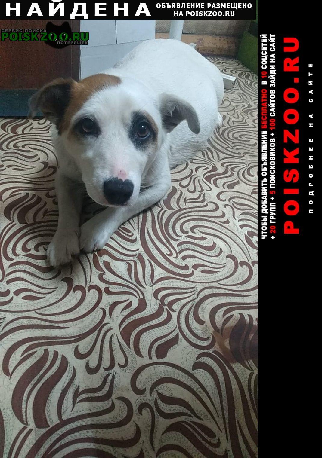 Найдена собака Зубцов