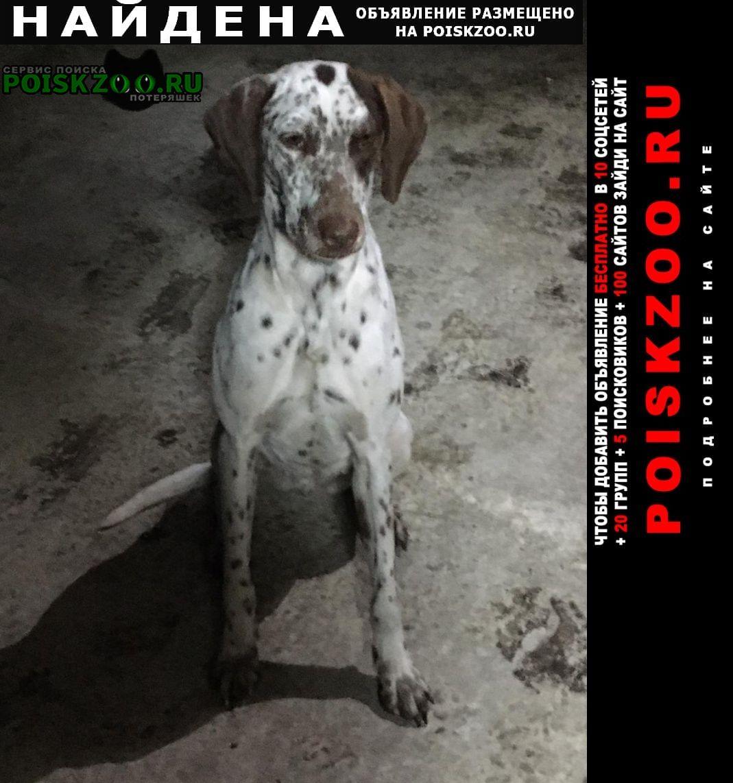 Найдена собака курцхаар Краснодар
