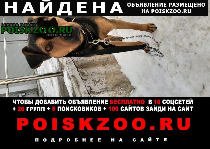 Найдена собака потеряшка 16 квартал Тольятти