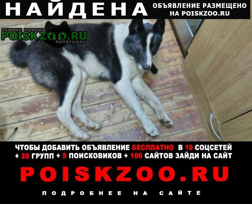 Найдена собака похожа на русско-европейскую лайку. Тверь