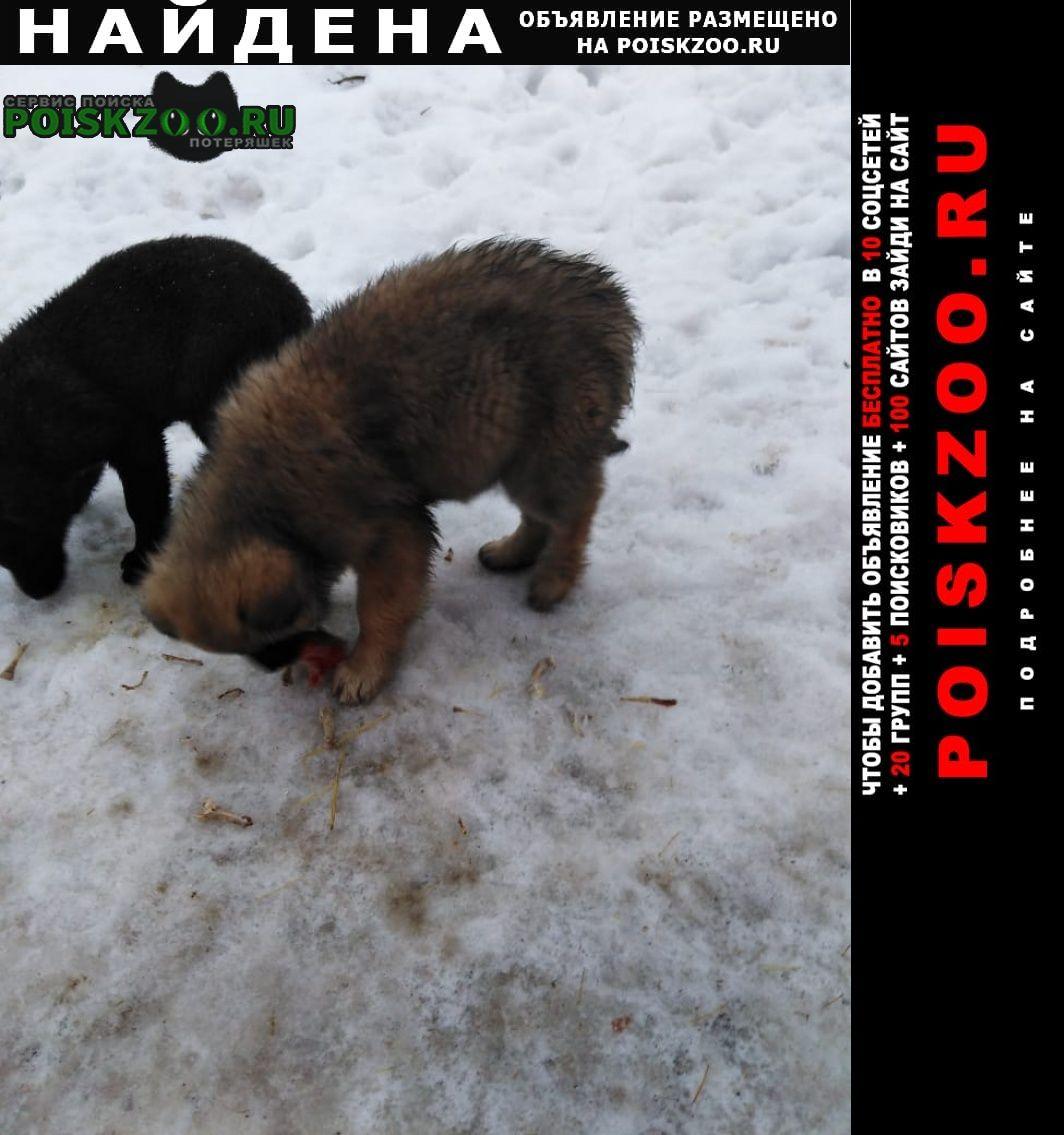 Найдена собака щенки Апрелевка