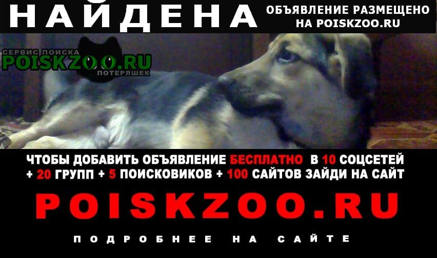Найдена собака Пенза