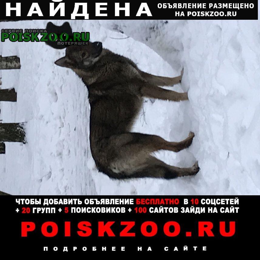 Найдена собака замечена потерявшаяся собачка Москва