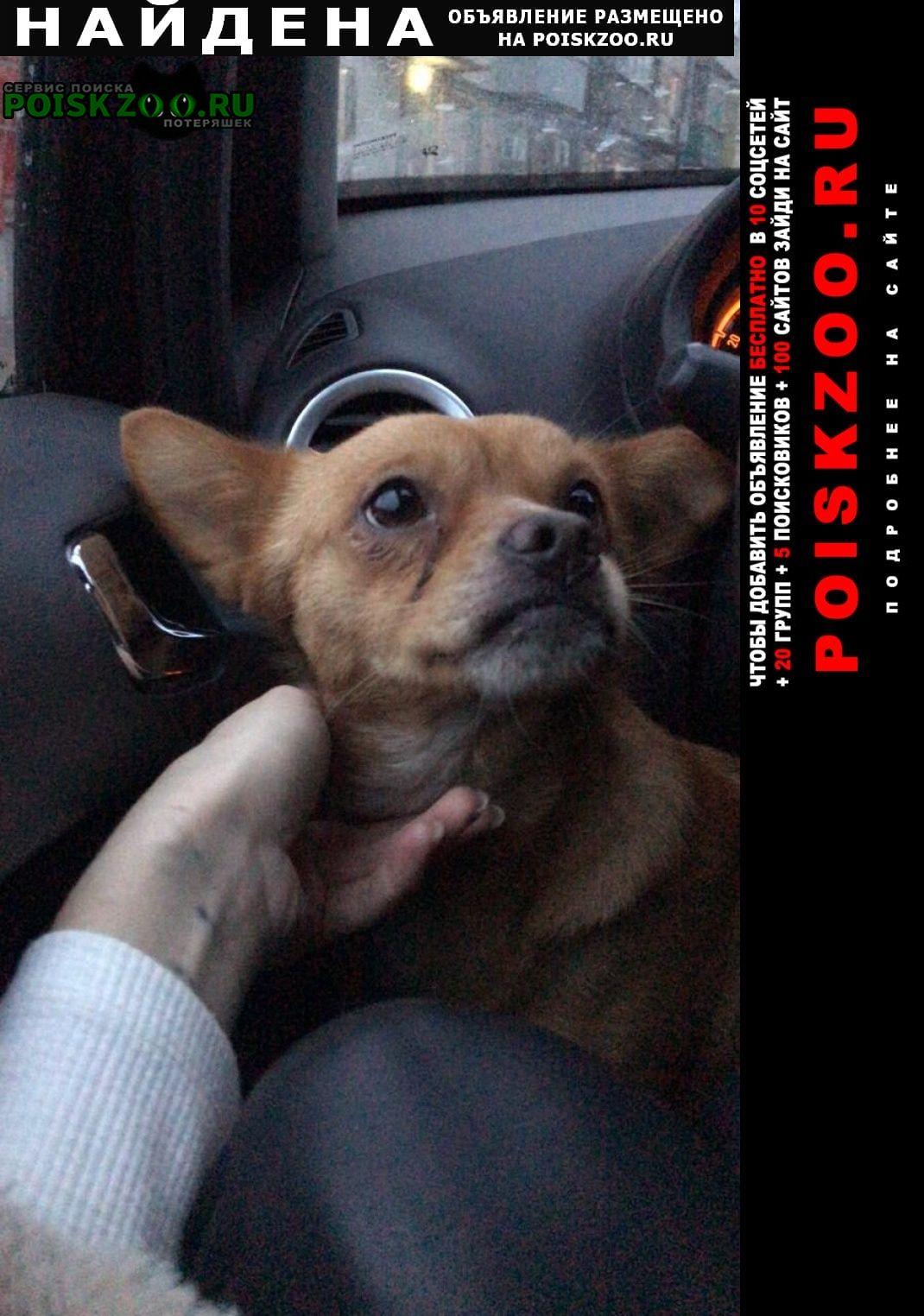 Найдена собака. Ростов-на-Дону