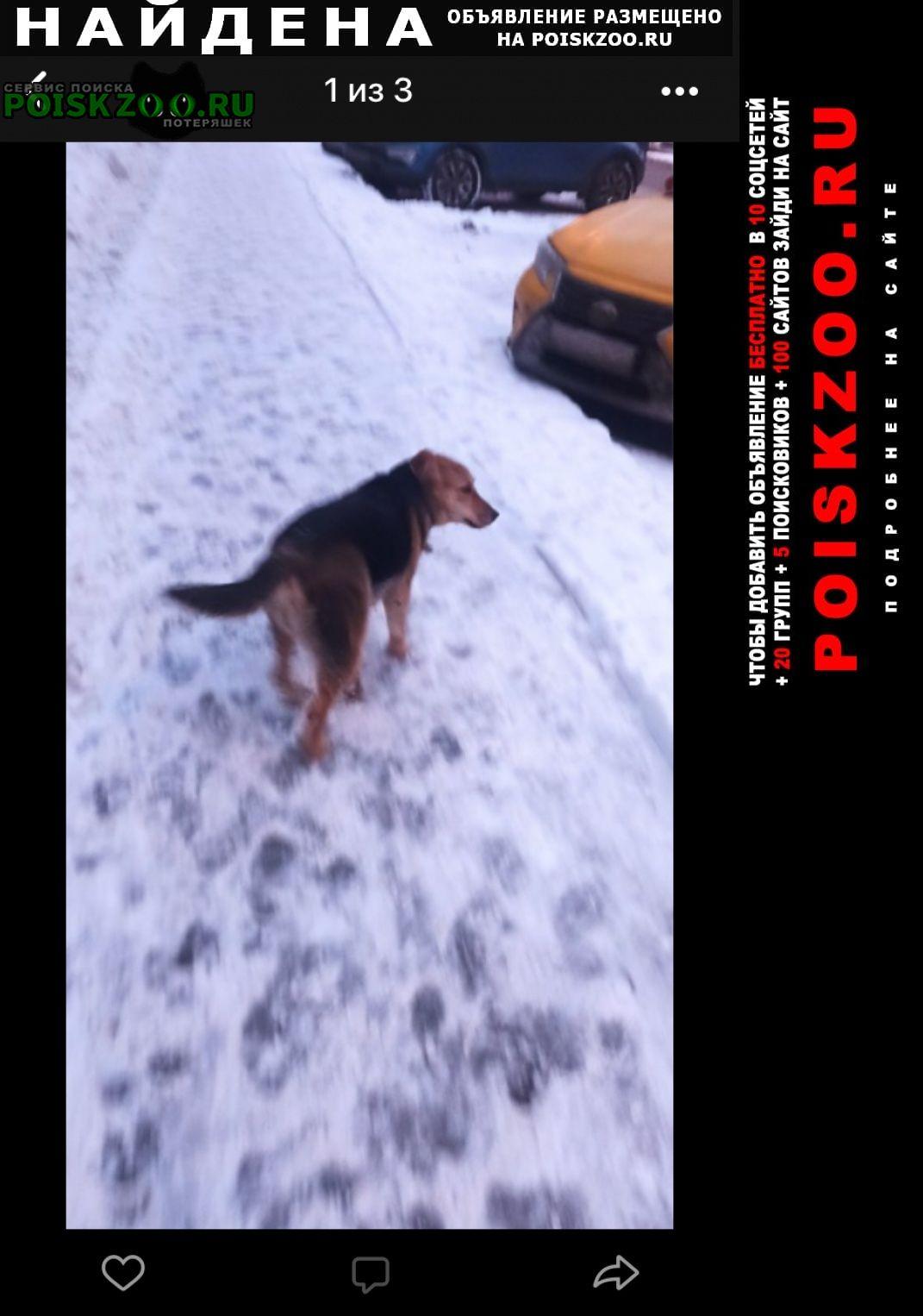 Найдена собака видели чью-то собаку Москва