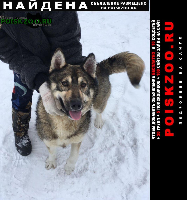 Найдена собака Дмитров