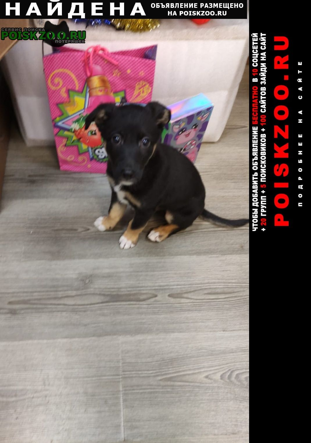 Найдена собака щенок Калуга