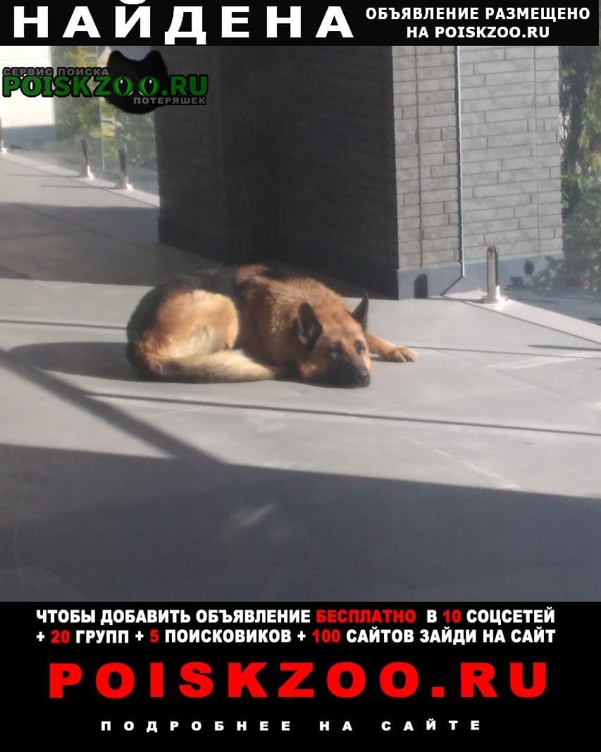 Найдена собака овчарка Сочи