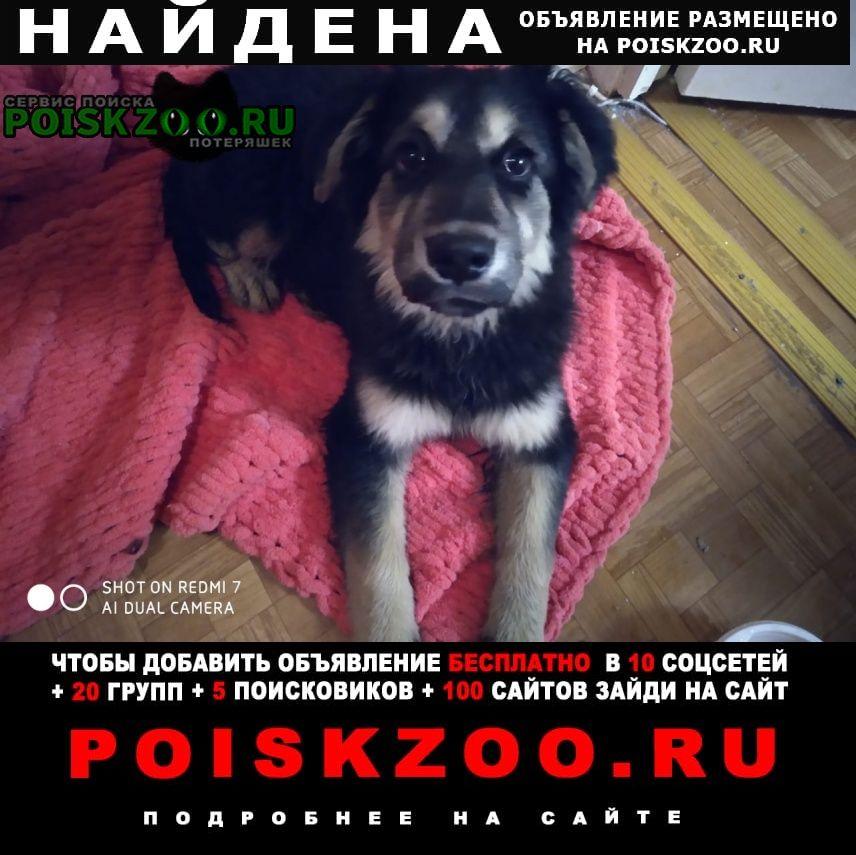 Найдена собака щенок девочка на станции Мытищи