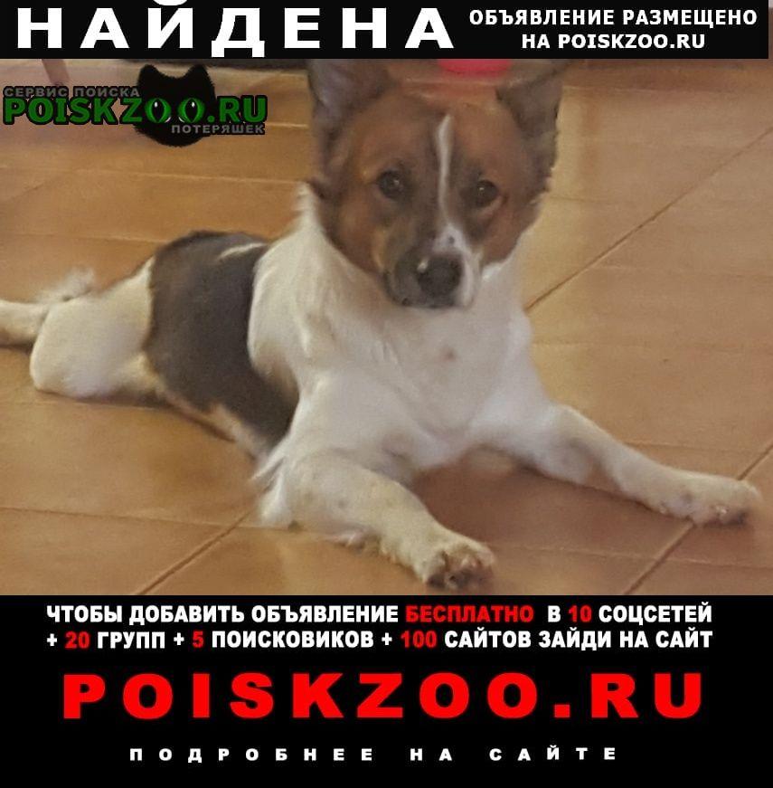 Найдена собака в коренево люберецкий рай Красково