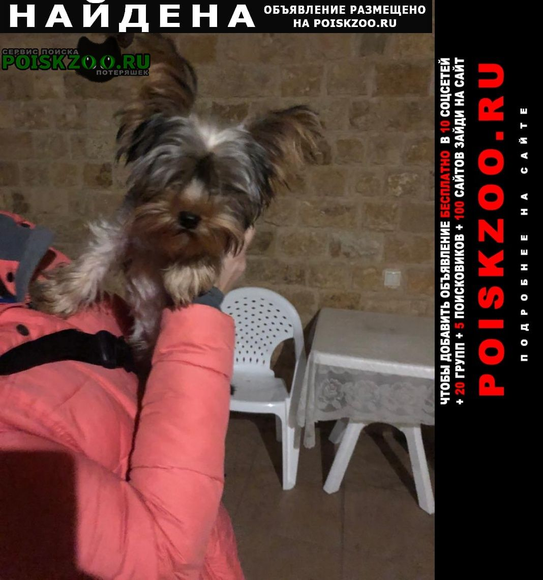 Найдена собака 2 февраля 21 г Адлер