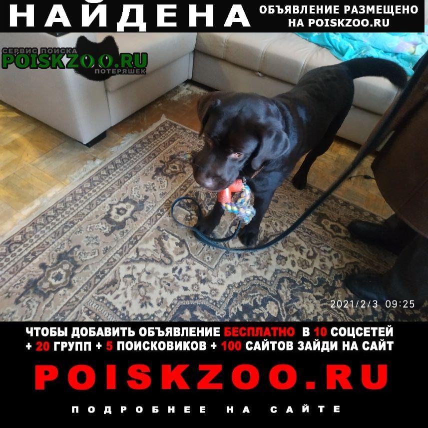 Найдена собака барни кличка Нижний Новгород