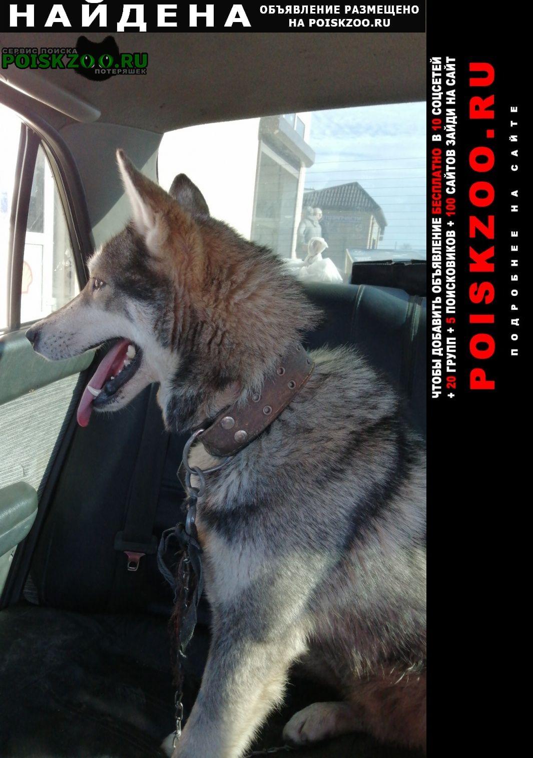 Найдена собака лайка, кобель Ильский