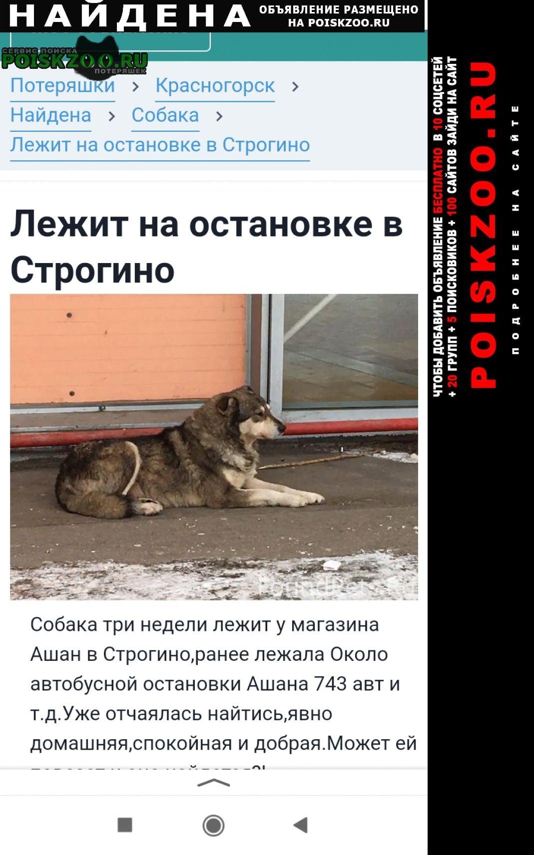 Найдена собака лежит на остановке в строгино Москва