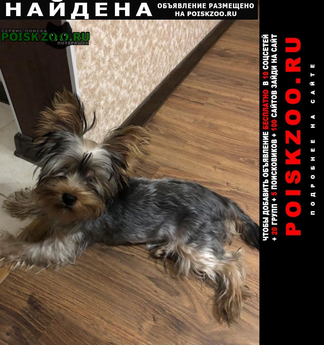Найдена собака йорк терьер в адлере Сочи