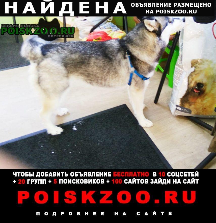 Найдена собака.г. п. токсово Всеволожск