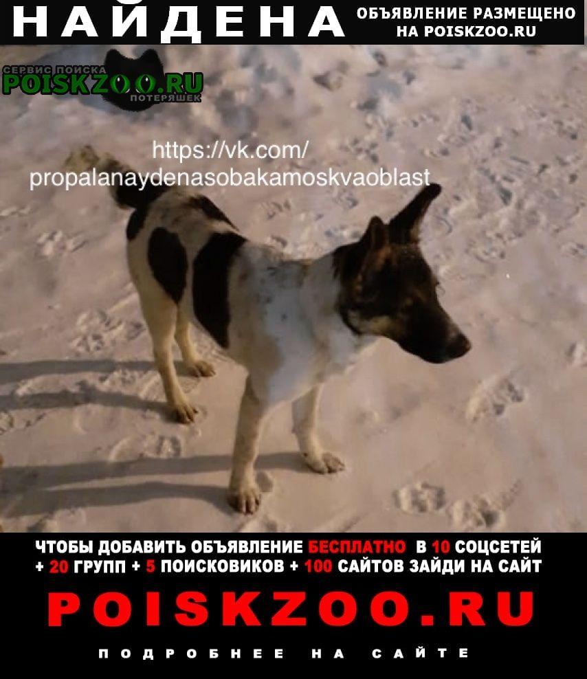 Найдена собака (кобель) Балашиха