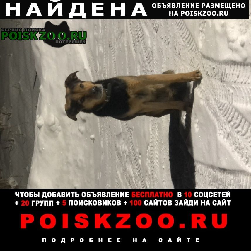 Найдена собака замечена в ошейнике Санкт-Петербург