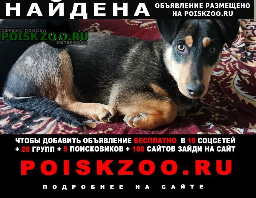 Найдена собака милый щенок ищет хозяев Рубцовск