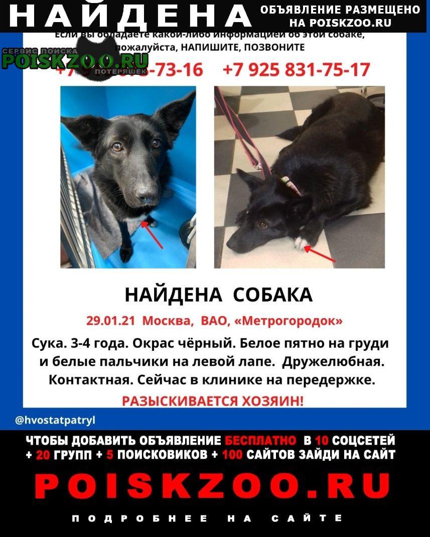 Найдена собака черная -девочка Москва