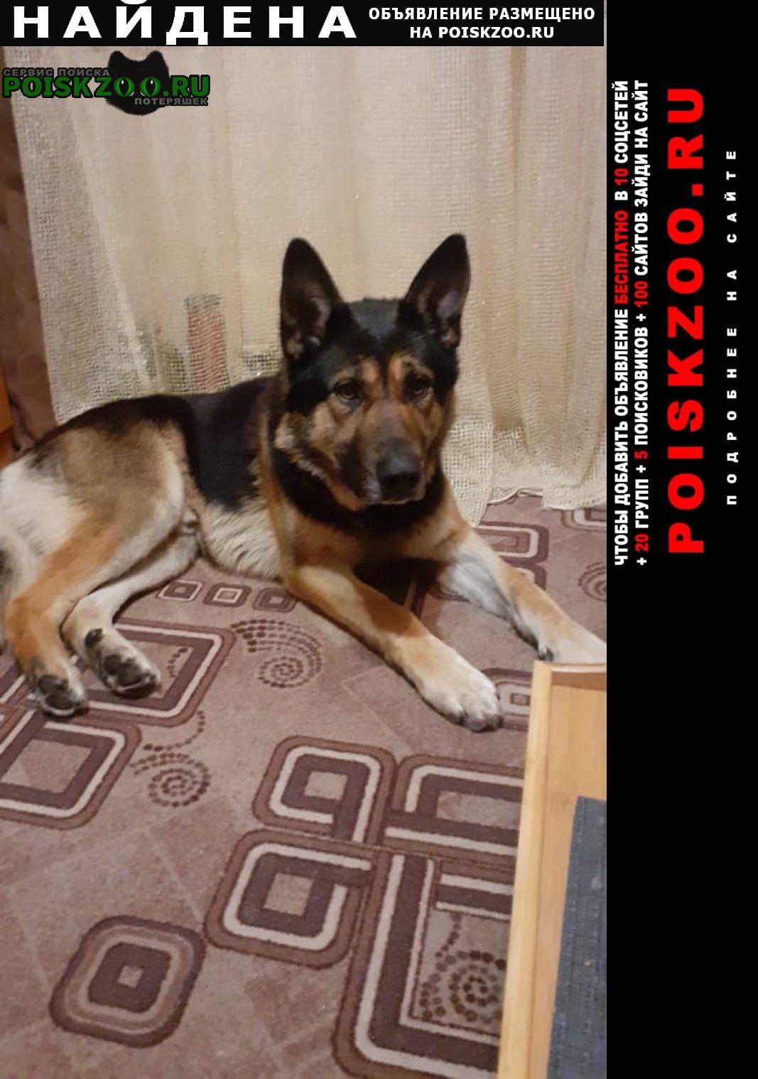 Найдена собака овчарка кабель с ошейником Шатура