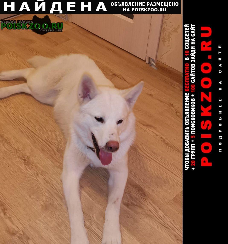 Найдена собака белая, средних размеров Тверь