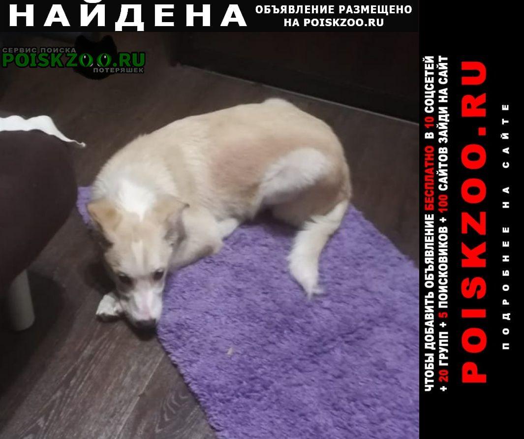Найдена собака.г. собачка мальчик. Новокузнецк