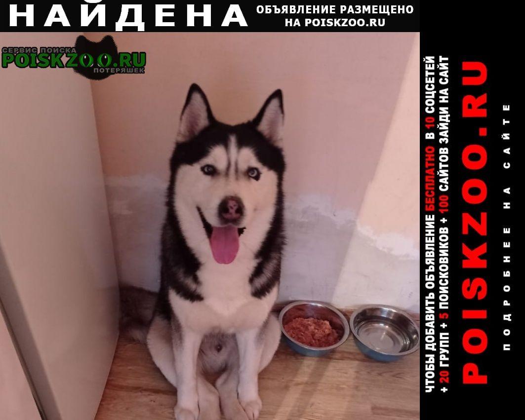 Найдена собака кобель хаски. взрослый Ростов-на-Дону