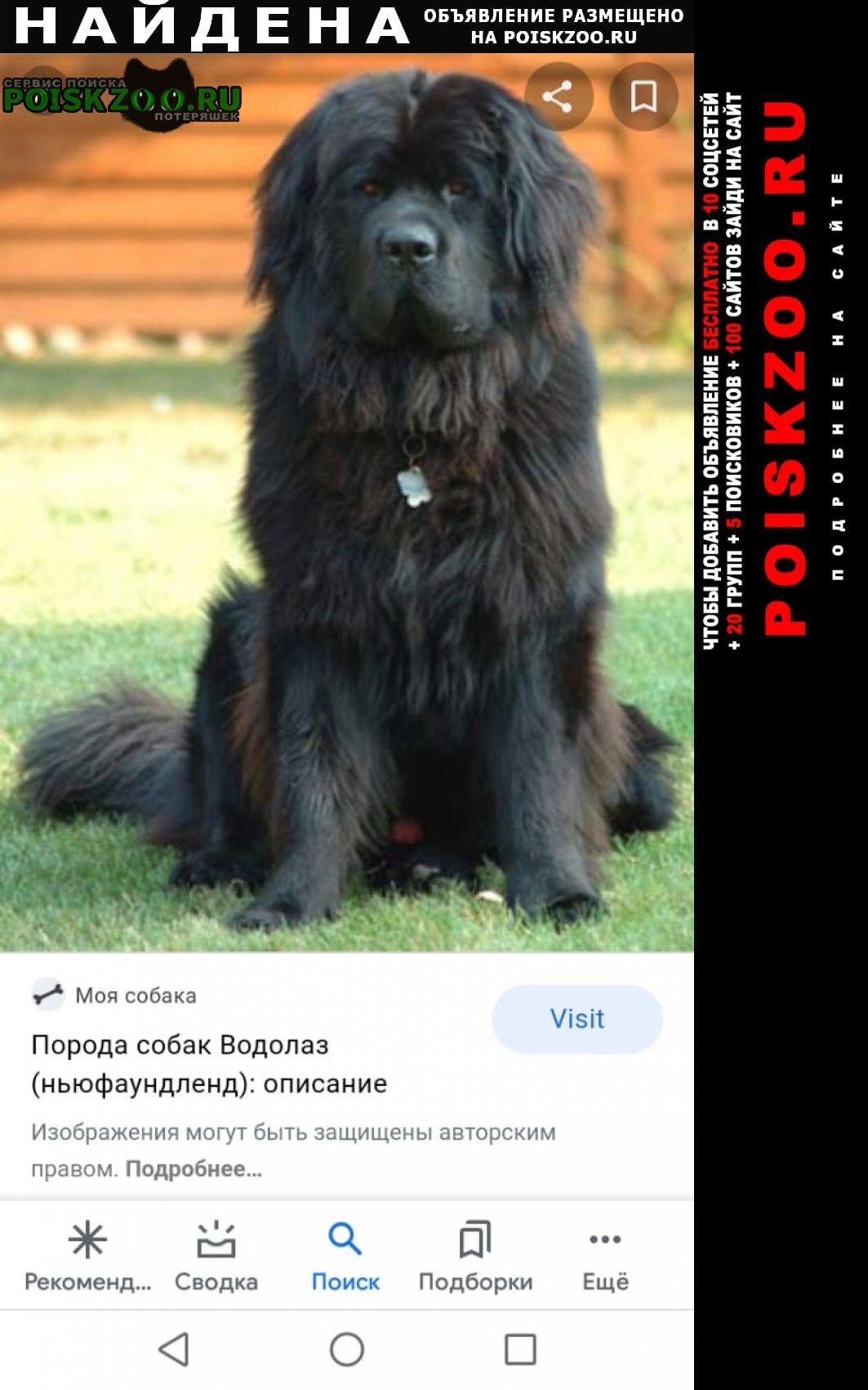 Найдена собака черного цвета длиношерстная Новосибирск