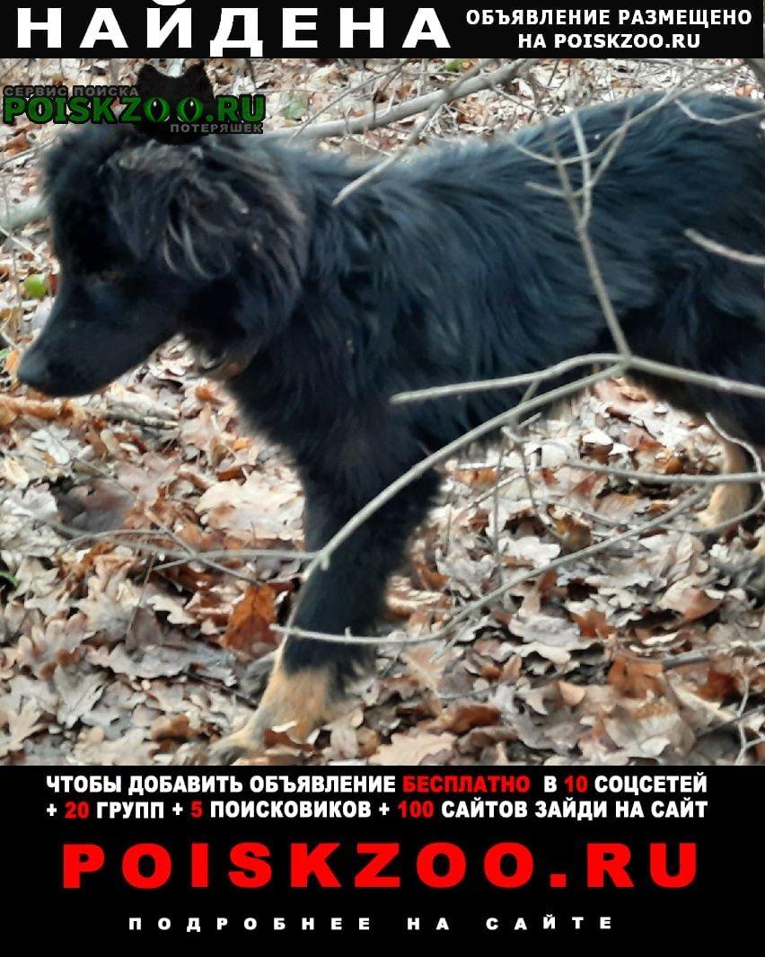 Найдена собака ищу человека Таганрог