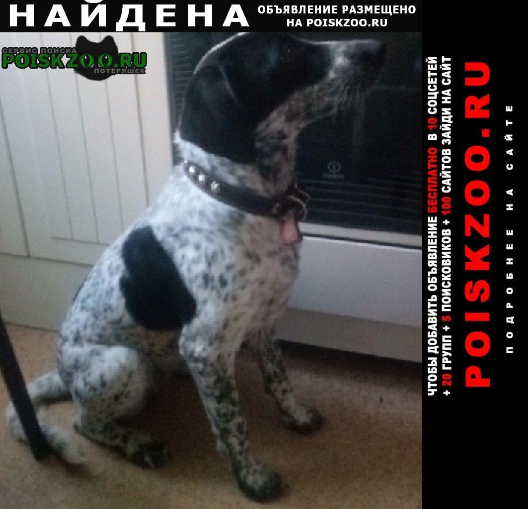 Найдена собака 5 февраля в электричке Сергиев Посад