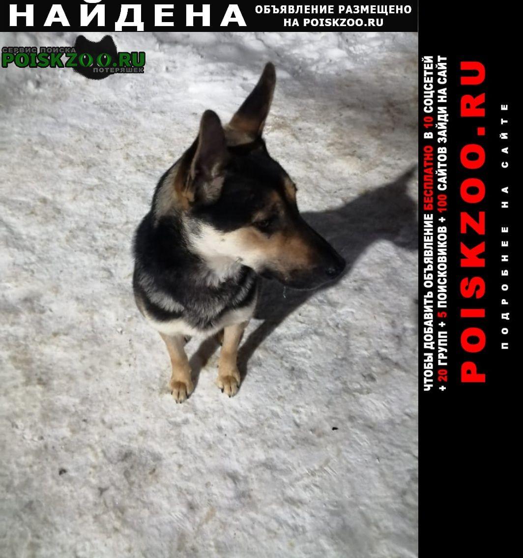 Найдена собака девочка Балашиха