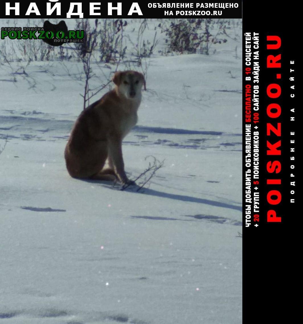 Найдена собака рыжий пёс, похоже на ох Волово