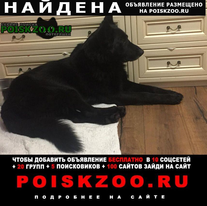 Найдена собака немецкая овчарка Железнодорожный (Московск.)
