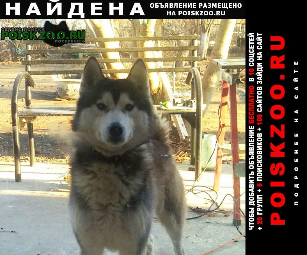 Найдена собака Астрахань