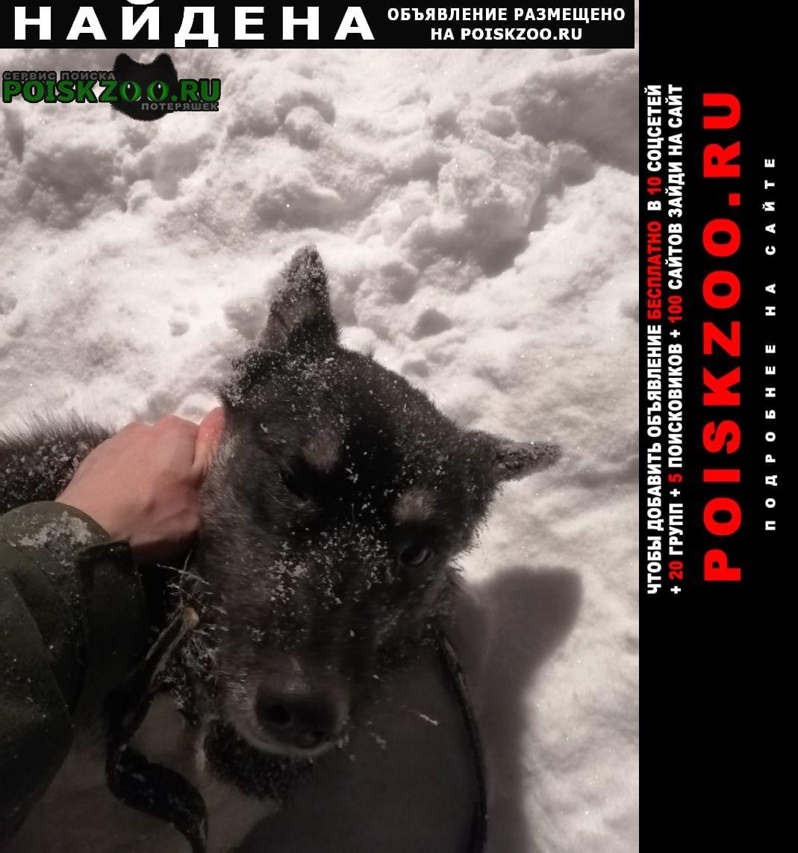 Найдена собака Котельники