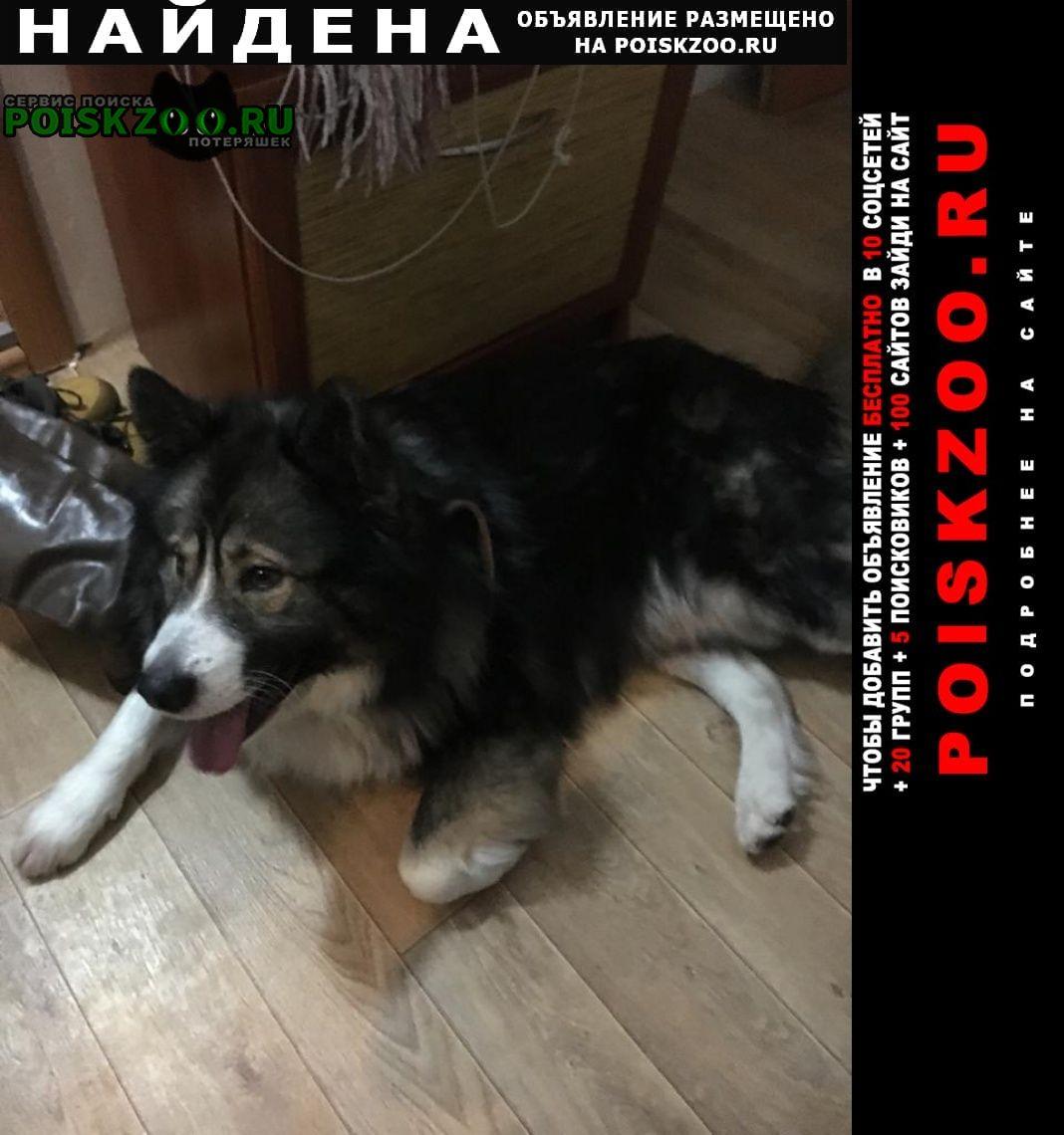 Найдена собака Курск